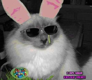That's one cool cat...I mean bunny!